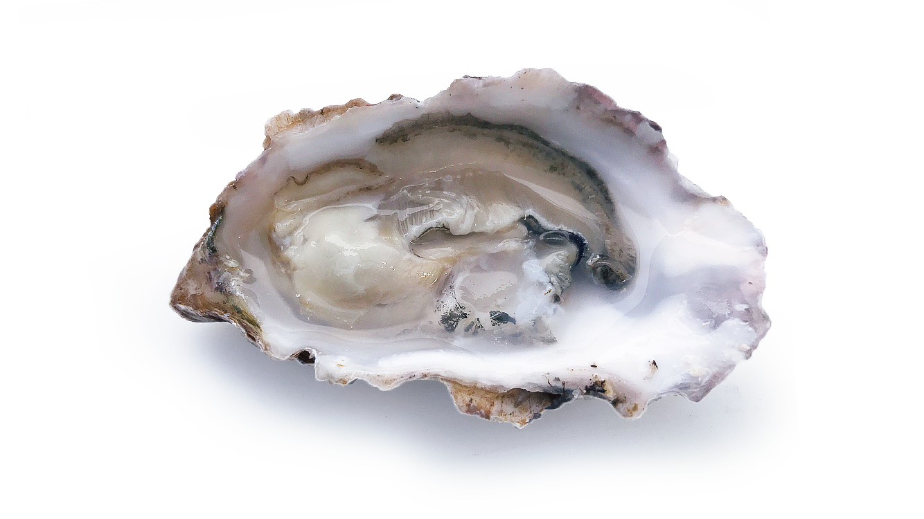oyster-front-1