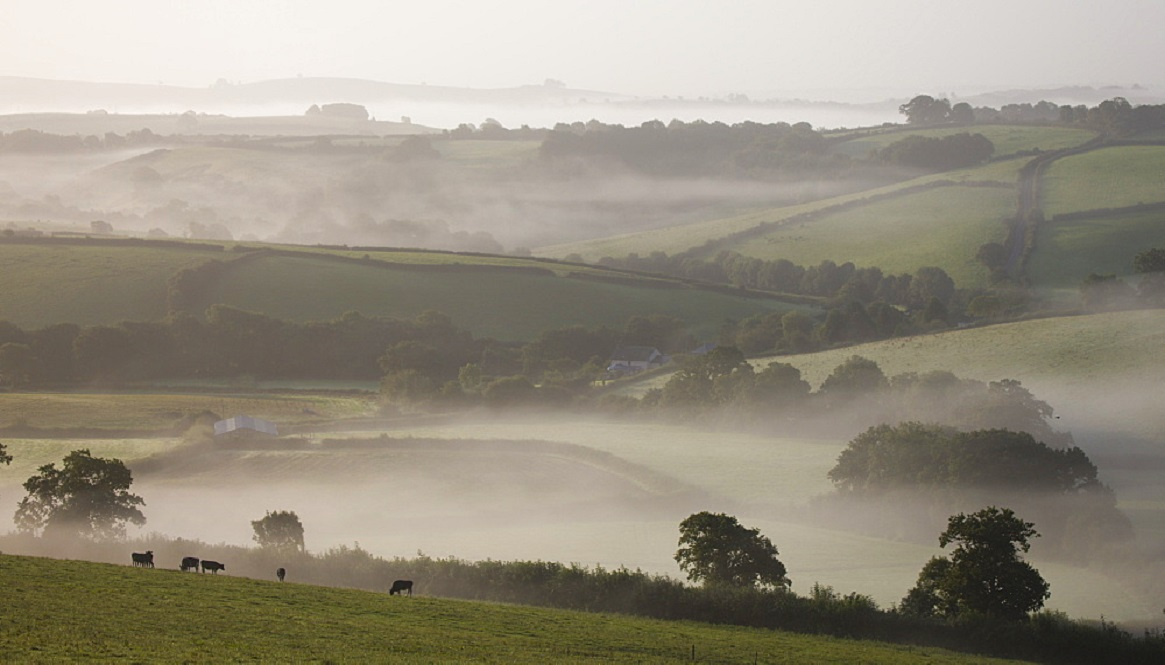 Dairy cattle graze in misty farmland near Crediton, Mid Devon, England, United Kingdom, Europe